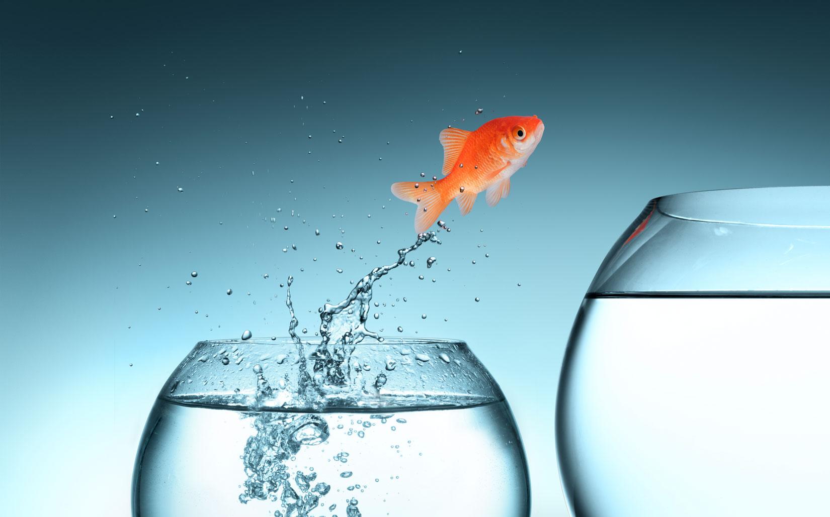 Illustrasjon av fisk som gjør et hopp